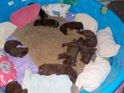 Good morning puppies
