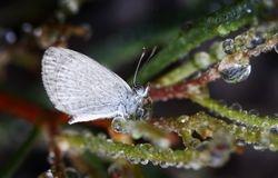 Butterfly n Dew