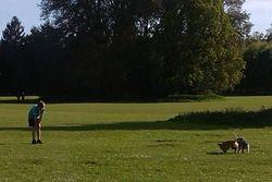 Running at Hardwick Heath