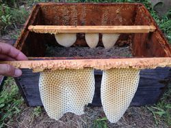 First topbar success