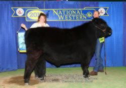 2013 NWSS GRAND CHAMPION CROSSBRED MARKET STEER VECTOR