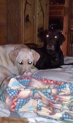 Savannaha and Hershey
