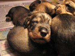 pup asleep