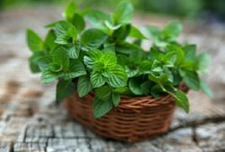 Mint was a Nymph before becoming herb, did you know?