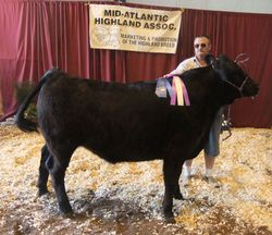 Champion HighxBred Steer