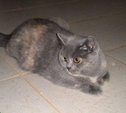 Gemma 14 months old
