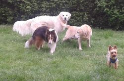 With my new friends, Brodie and Dusty and Hooch from round the corner