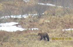 A Bear We Passed Up