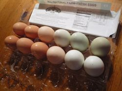 Hens are back to work after molting, Ya!