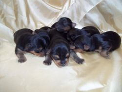Remy's babies at two weeks