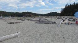 the Cut_-Thormanby Beach