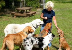 Vicki and her Dogs at Critter Care Farm