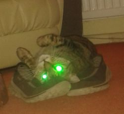 My smelly shoes are like catnip to Maddie!