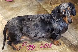 Figgy 2018
