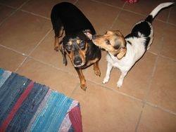 Dobie & Zoey