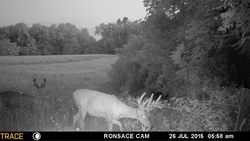 Close to food plot