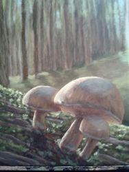 Focus On Fungi