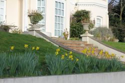 Rowden House with daffodils in January