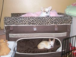 Dog bunk bed in the bedroom