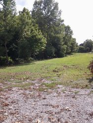 Creek clearing