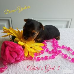 Addie's Girl 3 - 3 weeks old