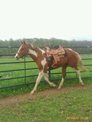 24 months starting under saddle