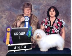 BISS GRAND CHAMPION Showboat Greek God Zuce (Coton de tulear)