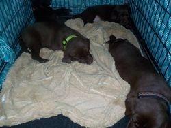 Pre-bedtime napping