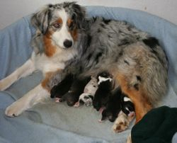 Amy and her pups, day 1.