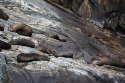Seals on rock in Milford Sound
