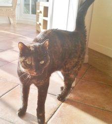 My feline sister, Ruby