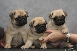 The boys from the litter, one of which is owned by Elisabeth Olsen