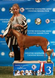 2 x CACIB Varazdin (CRO)- Alexis Femme Fatale Luanda - 2 x Lexi took it all!
