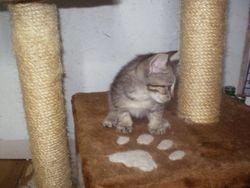 Kittens at 4 1/2 weeks