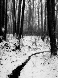 Wheaton Regional Park, Winter