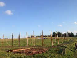 Progress in the Hop Yard