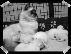 Proud mumma Shiloh & her babies