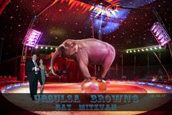 Circus, Animals, Green Screen Photo Booth