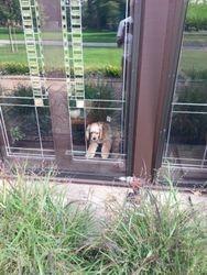 Lloyd enjoying newly installed storm windows