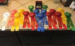 No matter what color the ribbon or how big the buckle, all our riders are champions.
