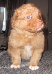 Puppy 8 - 4.5 weeks