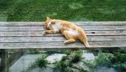 Bing Kitty