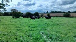 Fresh pasture!
