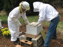 Help from a fellow bee keeper