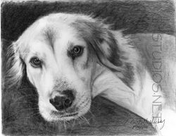 Juneau Dog Pet Portrait Commission