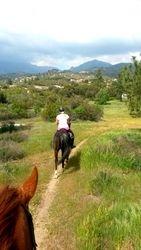Rising Horses Murrieta