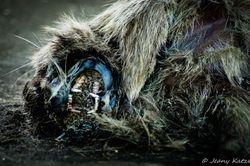 Rotten Racoon Rüderiger