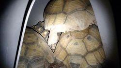 Tortoise Pile Up!