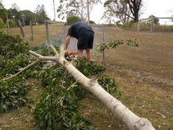 Tree Cutting 2