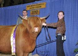 Junior Breeding Heifer Champion